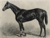 Dr Rice, winner of the Brooklyn Handicap 1894, Gravesand