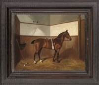 The polo pony 'Jessie' with stick and ball