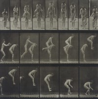 Untitled (from Animal Locomotion, plate 167), 1887