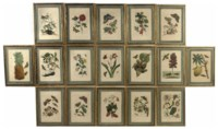 A SET OF SEVENTEEN HANDCOLOURED ENGRAVINGS DEPICTING VARIOUS PLANTS AND INSECTS FROM METAMORPHOSIS INSECTORUM SURINAMENSIUM
