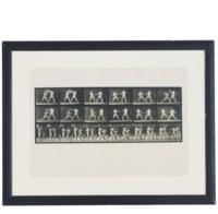 Animal Locomotion, Plate 329