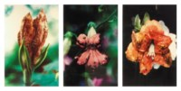 (i)   Infectious flowers (Zoster of supravicular dermatomes) (ii)  Infectious flowers (Metastases from a malignant melanoma) (iii) Infectious flowers (Intra epidermal carcinoma)