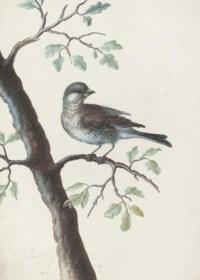 A bird on an oak branch