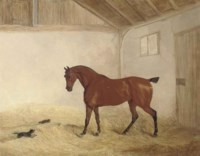 A bay hunter in a stable interior with a dog chasing a cat