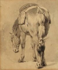 Study of a saddled horse
