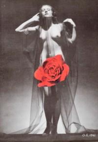 Sans titre (rose rouge)