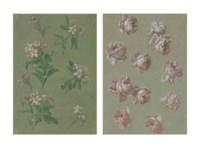 Studies of pink roses; and Studies of oleander