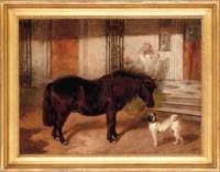 A Shetland pony and a pug