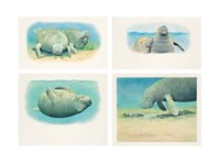 A set of four illustrations of Manatees