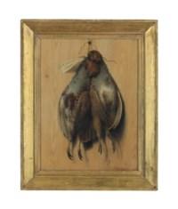Hanging grey partridge