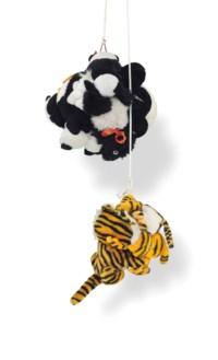 Tiger and Saddle Shoe