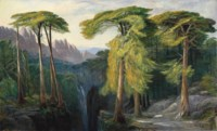 The Forest of Bavella