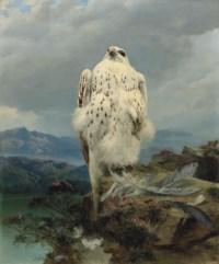 A gyrfalcon in an extensive mountainous landscape