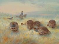 'A frosty dawn'