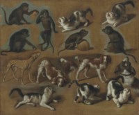 A study of cats, monkeys and dogs