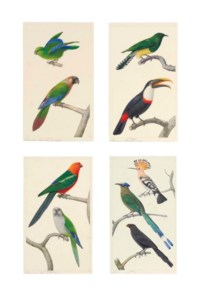 Exotic birds: Mexican parrotlet and Painted conure; Emerald cuckoo and Citron-throated Toucan; Green-winged king parrot and Monk parakeet; and Hoopoe, Blue crowned motmot, and Groove-billed ani