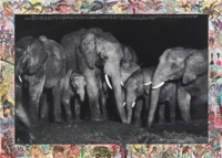 Elephant Family at Night at a salt lick, Aberdare Forest, 1972/2009