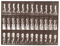 Animal Locomotion, Plate 116, 1887
